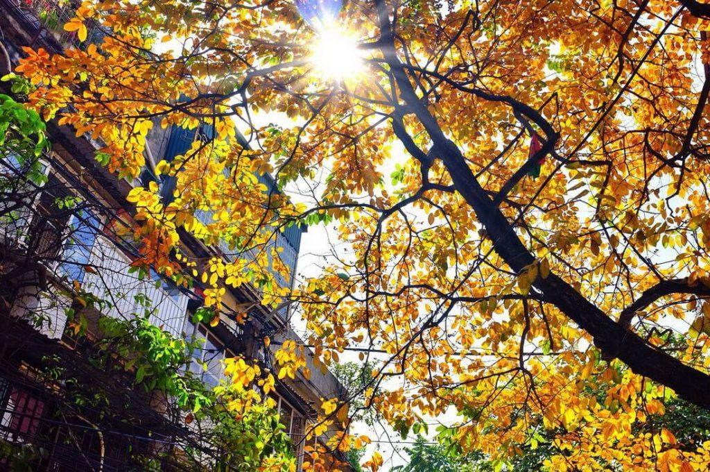 Góc phố bình yên mùa thu Hà Nội